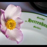 Gasthof Herrenhaus  in Dresden auf restaurant01.de