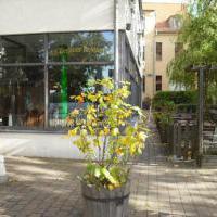 """Alt-Berliner Restaurant """"Zum Dampfschiff"""" in Berlin auf restaurant01.de"""